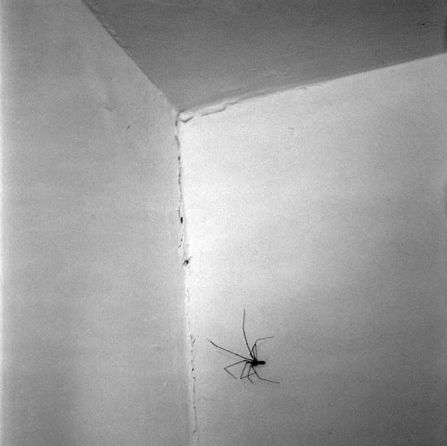 el antro de la araña
